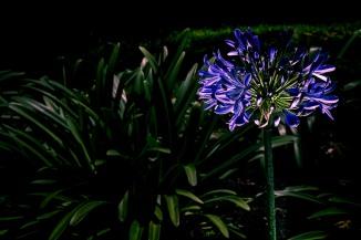 Luz en la Luz. Asesor Iluminación: Cristhian Gaviria
